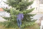 Aufstellen Weihnachtsbaum 2020_11