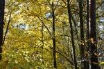 Herbst in Plech_4