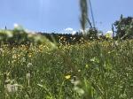 Frühjahr / Sommer in Plech